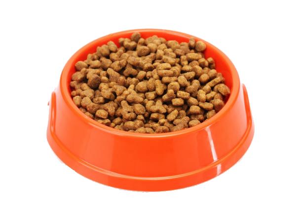 Pumpkin Cat Food Bowl